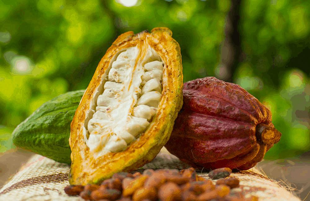 El dinero más sabroso: El uso del cacao como medio de pago